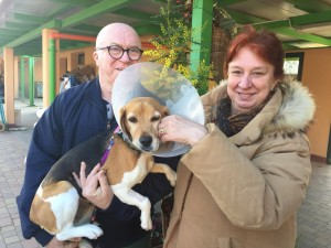 Milly, beagle (1)-1